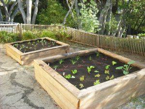 servicios de jardinería madrid
